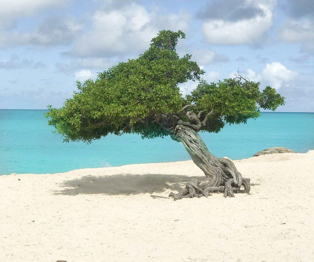 stranden-aruba