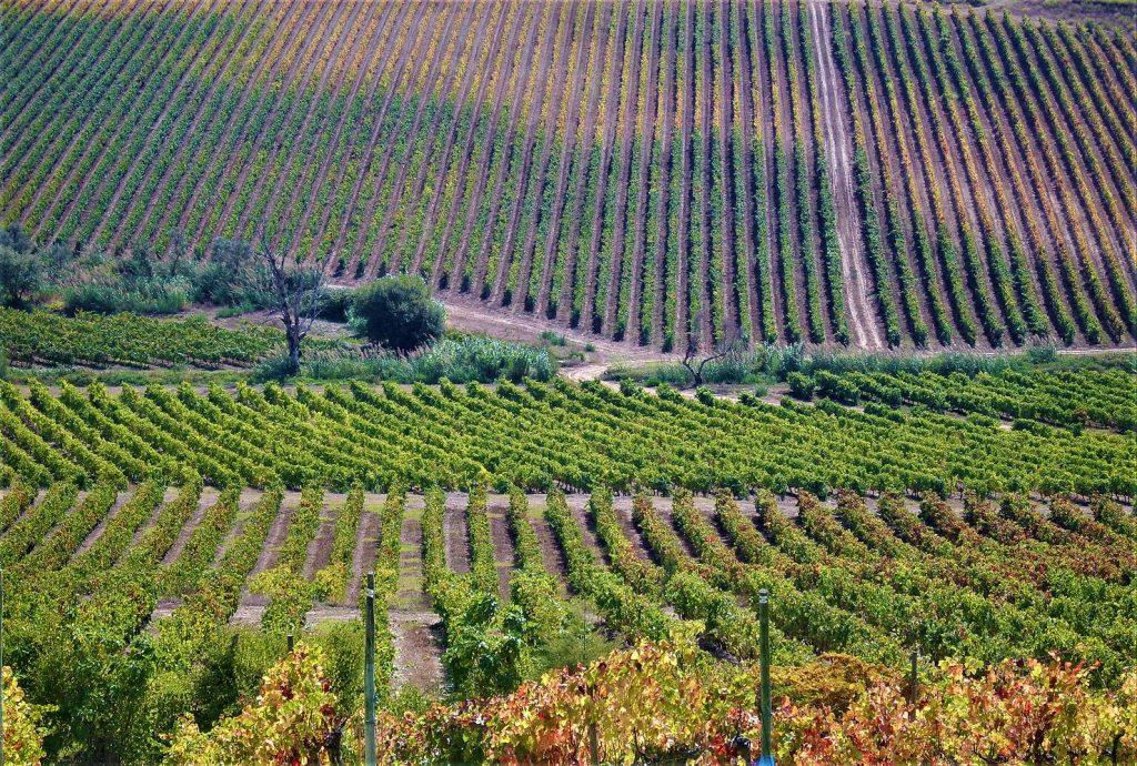 wijnregios-in-portugal
