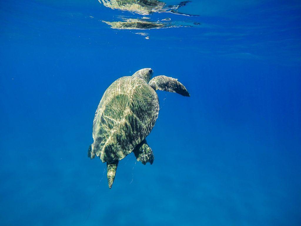 schildpadden-zakynthos