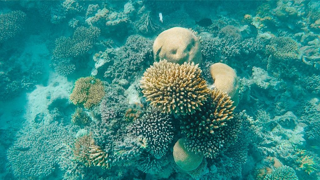 snorkelen-el-gouna