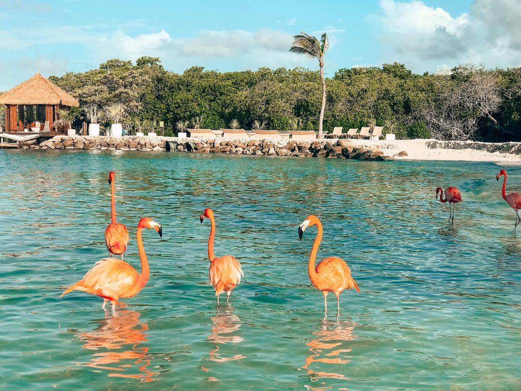 flamingos-aruba
