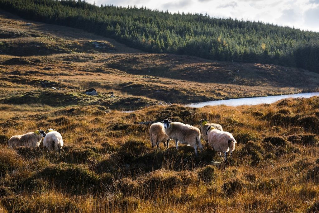 mooiste-natuur-ierland