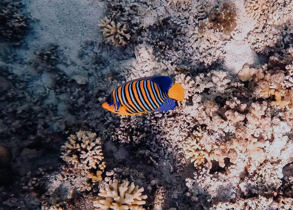 snorkelen-taba-egypte