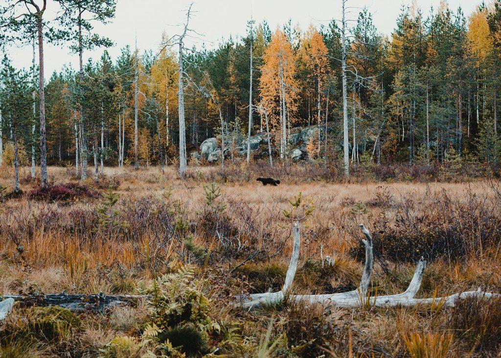 beren-finland